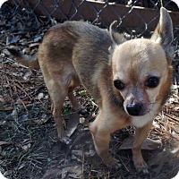 Adopt A Pet :: Tater Tot - Savannah, GA