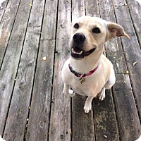 Adopt A Pet :: Daisy - Cambridge, ON