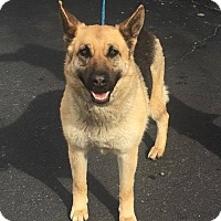 Adopt A Pet :: Sandy - Las Vegas, NV