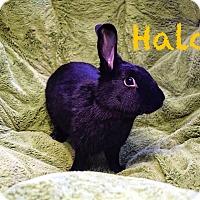 Adopt A Pet :: Halo - Elizabethtown, KY