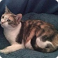 Adopt A Pet :: Lila - New Market, MD
