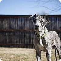 Adopt A Pet :: Jack - Broomfield, CO
