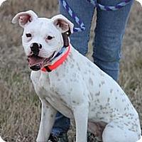 Adopt A Pet :: Dali - Houston, TX