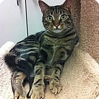 Adopt A Pet :: Percy - Warminster, PA