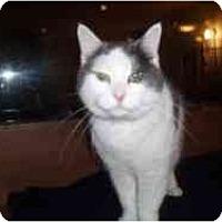 Adopt A Pet :: Allie - Hamburg, NY