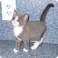 Adopt A Pet :: Rascal - Harrisburg, NC