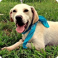 Adopt A Pet :: ABNER - Leland, MS