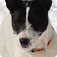 Adopt A Pet :: Reva - Oliver Springs, TN