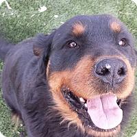 Adopt A Pet :: Zeeah - Gilbert, AZ