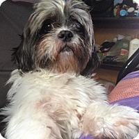 Adopt A Pet :: IZOD - Los Angeles, CA