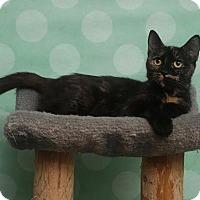 Adopt A Pet :: Catty - Chippewa Falls, WI