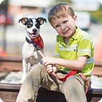 Adopt A Pet :: Rocky - Buffalo, NY