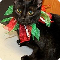 Adopt A Pet :: MOONLIGHT - Tiffin, OH