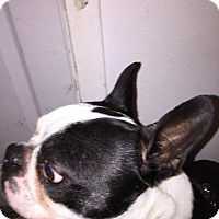 Adopt A Pet :: Mikey - Weatherford, TX