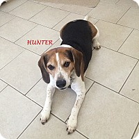 Adopt A Pet :: HUNTER- Courtesy Posting - Ventnor City, NJ