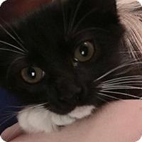 Adopt A Pet :: Cri Kee - Gainesville, FL