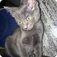 Adopt A Pet :: Incana - Mississauga, Ontario, ON