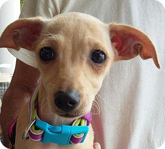 Chihuahua/Dachshund Mix Dog for adoption in Winder, Georgia - Sandy