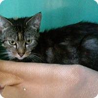 Adopt A Pet :: Beauty - Franklin, NH