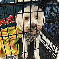 Adopt A Pet :: Max Boo Boo - Tucson, AZ