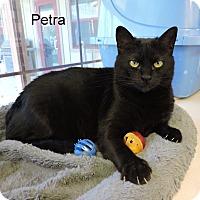 Adopt A Pet :: Petra - Slidell, LA