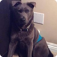 Adopt A Pet :: Smokey - Litchfield Park, AZ