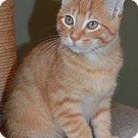 Adopt A Pet :: Am Litter Bob - Adopted 12.04.16 - Williamston, MI