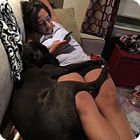 Adopt A Pet :: Henry - Brattleboro, VT