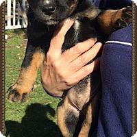 Adopt A Pet :: Lana - Alta Loma, CA