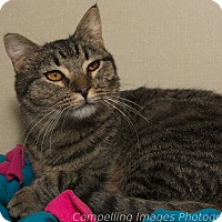 Adopt A Pet :: Larry - Fort Collins, CO
