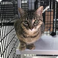 Adopt A Pet :: Bambi - Stockton, CA