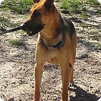 Adopt A Pet :: CESAR / CLEO - SAN ANTONIO, TX