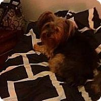 Adopt A Pet :: Marisol - Lorain, OH