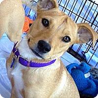 Adopt A Pet :: Emily - Phoenix, AZ