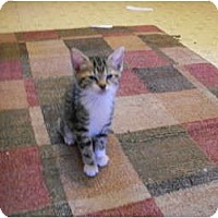 Adopt A Pet :: Armani - Kirkwood, DE