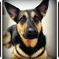 Adopt A Pet :: Lucy - Pascagoula, MS