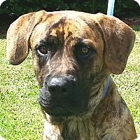 Adopt A Pet :: Zena - Orlando, FL
