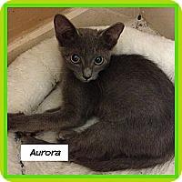 Adopt A Pet :: Aurora - Miami, FL