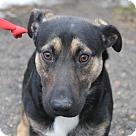 Adopt A Pet :: Bernard
