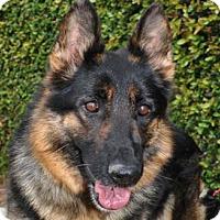Adopt A Pet :: Haley - Newport Beach, CA