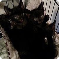 Adopt A Pet :: Eenie,Meenie,Miney,Mo - Berkeley Hts, NJ