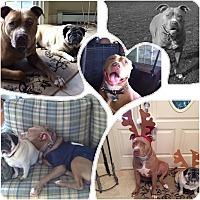 Adopt A Pet :: SMOKEY (COURTESY POST) - Bristol, CT