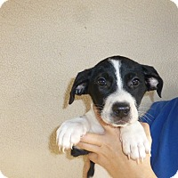Adopt A Pet :: Gabrielle - Oviedo, FL