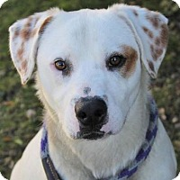 Adopt A Pet :: SPIKE - Red Bluff, CA