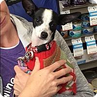 Adopt A Pet :: Cozy - West Los Angeles, CA