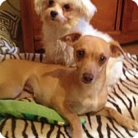Adopt A Pet :: Harper & Emma- sweet duo - Snohomish, WA