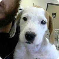 Adopt A Pet :: MAGIC - Conroe, TX