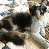 Adopt A Pet :: Patches - Mission Viejo, CA