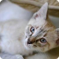 Adopt A Pet :: Prince - Redondo Beach, CA