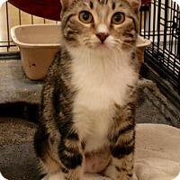 Adopt A Pet :: Jaqueline - Sacramento, CA